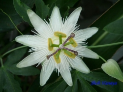 熱帯環境植物館9