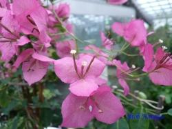 熱帯環境植物館10