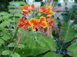 熱帯環境植物館12