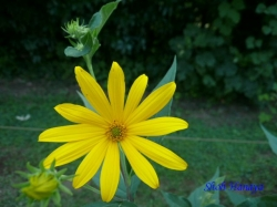小石川植物園8月の花4