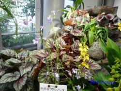 _渋谷区ふれあい植物センター3