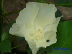板橋区立赤塚植物園の花2