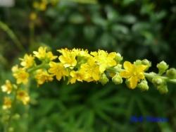 板橋区立赤塚植物園の花4