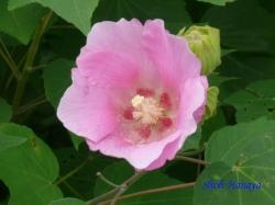皇居東御苑9月の花4