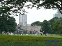 皇居東御苑9月の花8