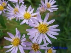 小石川植物園9月の花4