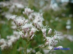 小石川植物園9月の花5