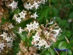 小石川植物園9月の花6