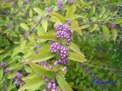 小石川植物園9月の花7