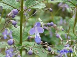小石川植物園9月の花8