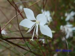 小石川植物園9月の花9