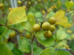 小石川植物園9月の花11