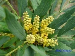 小石川植物園9月の花12