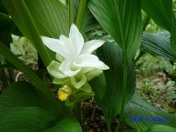 小石川植物園9月の花14