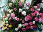 神代植物公園秋のバラ展を新宿駅西口広場で観賞_1