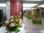 神代植物公園秋のバラ展を新宿駅西口広場で観賞_2