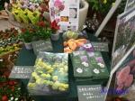 神代植物公園秋のバラ展を新宿駅西口広場で観賞_3