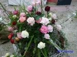 神代植物公園秋のバラ展を新宿駅西口広場で観賞_7