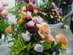 神代植物公園秋のバラ展を新宿駅西口広場で観賞_8