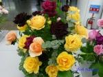 神代植物公園秋のバラ展を新宿駅西口広場で観賞その2_6