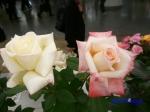 神代植物公園秋のバラ展を新宿駅西口広場で観賞その2_12