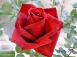 神代植物公園秋のバラ展を新宿駅西口イベント広場で観賞その3_6