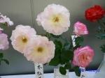 神代植物公園秋のバラ展を新宿駅西口広場で観賞その4_2