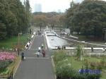 代々木公園の秋バラその2_15
