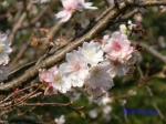 皇居東御苑10月の花と桜_1