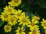 皇居東御苑10月の花と桜_2