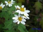 皇居東御苑10月の花と桜_3
