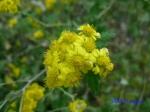 皇居東御苑10月の花と桜_6