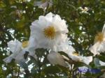 皇居東御苑10月の花と桜_7