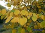 皇居東御苑10月の花と桜_8
