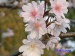 皇居東御苑10月の花と桜_14