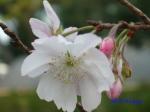 皇居東御苑10月の花と桜_15
