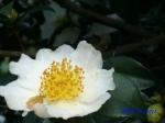 小石川植物園10月の花_11