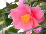 皇居東御苑1月の花_5