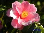皇居東御苑1月の花その2_1