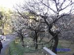皇居東御苑1月の花その2_5