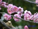 皇居東御苑1月の花その2_6