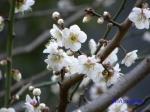 皇居東御苑1月の花その2_7