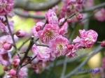皇居東御苑1月の花その2_8