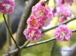 皇居東御苑1月の花その2_9