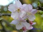 皇居東御苑1月の花その2_11