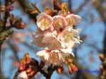 皇居東御苑1月の花その2_12