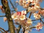 皇居東御苑1月の花その2_13