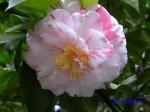 小石川植物園1月の花_5