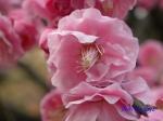 小石川植物園1月の花その3_8
