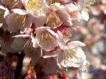 新宿御苑2月の花_3